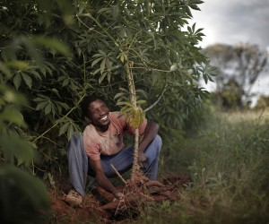 cassava_in_mozambique_imagecredit_sabmiller.jpg